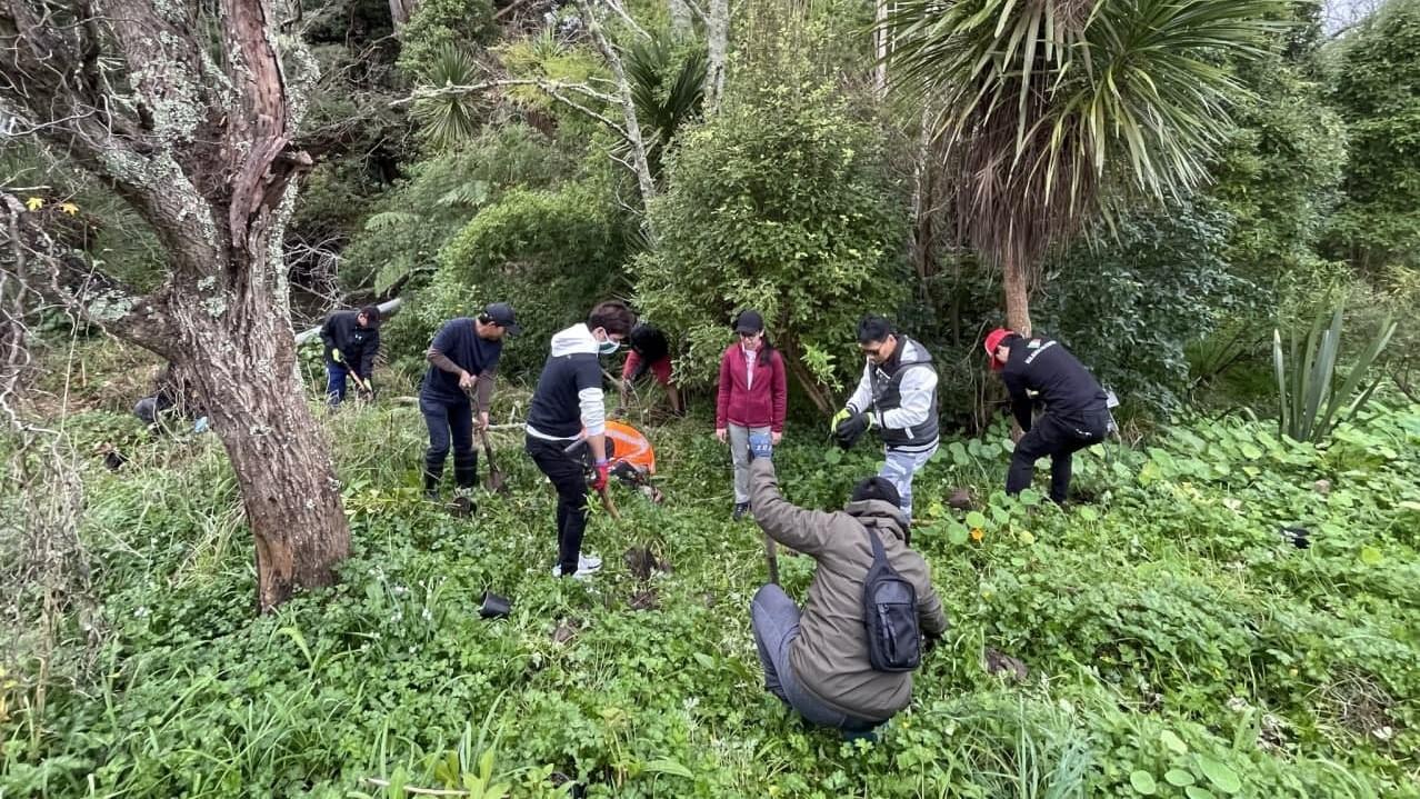 Auckland brethren help green the environs